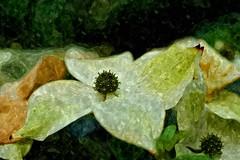 Flower (Jens III) Tags: macro makro macrodreams sonyalpha6000 summer paint painting watercolor flickr colors colorful