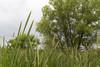 Spring follows summer (pdecell) Tags: spring kansas green bakerwetlands