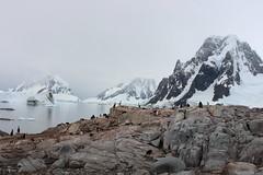 Antarctica 🇦🇶 . (wildirishman37) Tags: wildirishman37 antarctica