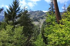Mex (bulbocode909) Tags: valais suisse mex montagnes nature printemps forêts arbres troncs nuages paysages vert bleu