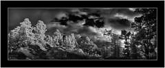 DSC01800_stitch (Bartonio) Tags: 720nm bw blanconegro canaryislands clouds garafía infrared ir islascanarias lapalma landscape modified monochrome nature nikkor24mm2 nubes paisaje pinar pine pino puestasol sonya7ir stitch sunset tree