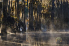 Sleeping Giants (jojo (imagesofdream)) Tags: tree swamp bayou mist southern region landscape