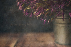 Alium (again!) (Janet_Broughton) Tags: lensbaby velvet85 alium textured flypapertextures painterly