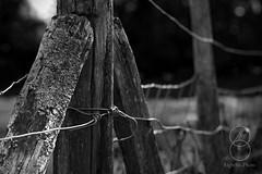 Fence_B&W (eightsix.photo) Tags: blackwhitephotos bw blackwhite blackandwhite bandw monochrome fence affinity affinityphoto pevensy uk sussex farm wood lichen dslr canon 500d f5 1400sec 100mm iso100 camping detail contrast angles noiretblanc