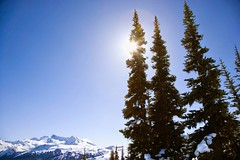 Stock Images (perfectionistreviews) Tags: color horizontal vacation travel outdoors ski skiresort pinetrees snow mountains landscape scenic nature tourism copyspace skigear whistler canada britishcolumbia photograph