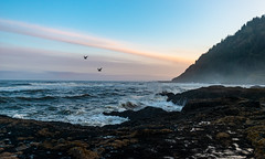 CapePerp5302018-8 (Ranbo (Randy Baumhover)) Tags: oregon oregoncoast pacificocean capeperpetua hwy101