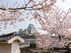 The Himeji Castle, Japan (pixontrips) Tags: himejicastle hiroshima japan japanese asia beautiful beauty bloom blooming blossom blossoms blurry building cherry cherryblossom cherryblossoms flora flower floweringtrees garden gathering grass hanami hilltop landscape natural nature park petals pink plant river sakura season sky spring stream tourism tree trees water white