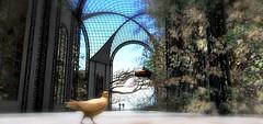 Little Bird of Heaven (jana's Moments) Tags: bird gate heaven tree flower dream sky