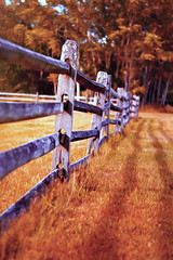 Fence (-Simulacrum-) Tags: fence nature nikon nikond5300 50mm 500mmf18 nikon50mm park nikonphotography textured texture