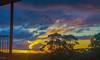 Flying Home (el-liza) Tags: sunsetaftertherain nature outdoor outside sky niebo clouds chmury zachod slonca trees vibrant vivid colourful natura blue yellow australia