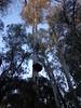 Eucaliptal (Eucalyptus). Fregenal de la Sierra (Badajoz (alexcasbar) Tags: eucalyptus turismo vegetación geografíafísica relieve orografía tourism vegetation physicalgeography relief orography biogeografía biogeography fregenaldelasierra badajoz