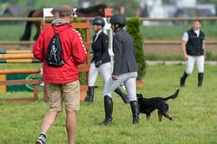 A9907185_s (AndiP66) Tags: springen pfingstspringen pfingsten pfingstmontag ettiswil 2018 21mai2018 mai pferd horse schweiz switzerland kantonluzern cantonlucerne concours wettbewerb horsejumping equestrian sports springreiten pferdespringen pferdesport sport sony alpha sonyalpha 99markii 99ii 99m2 a99ii ilca99m2 slta99ii sony70400mm f456 sony70400mmf456gssmii sal70400g2 amount andreaspeters