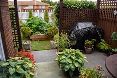 Summer Growth (Jocey K) Tags: newzealand nikond750 christchurch architecture building veggiegarden house plants garden sky