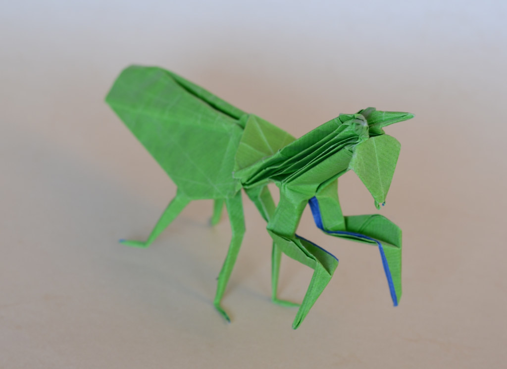 The Worlds Best Photos Of Insects And Origami Flickr Hive Mind