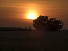 P5310136 (turbok) Tags: landschaft neusiedlersee see sonnenaufgang stimmungen wasser c kurt krimberger