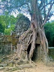 (wandering architect) Tags: ta som temple angkor cambodia siem reap tree root