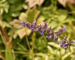 A0086DENMc (preacher43) Tags: fredensborg palace denmark zealand lake esrum flower