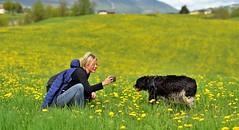One photo for the dog (maurizio.pretto) Tags: montagna fiori prati campi animali primavera spring asiago italy