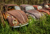 Pole Position (Wayne Stadler Photography) Tags: vehicles weeds weathered volkswagen vintage retro aged collection rustographer texas red german rusty automobiles abandoned classic rustography derelict rust car roadside cars rural bugs automotive beetles field