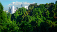 City in the Jungle (kate willmer) Tags: city skyscraper jungle trees green building architecture forest singapore