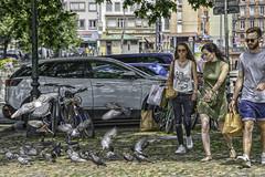 La loi du plus fort (boomer_phil) Tags: pigeons rue street pavés homme femmes beautifulexpression flickrelite nikon d850 extérieur oiseaux couleurs
