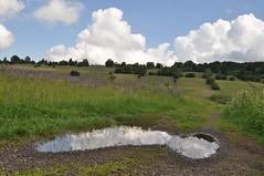(Uli He - Fotofee) Tags: ulrike ulrikehe uli ulihe ulrikehergert hergert nikon nikond90 fotofee wanderung lupinen bayrischerhön rhön
