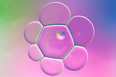 """Hexagonal Spill (""""The Wanderer's Eye Photography"""") Tags: 2017 bangalore canoneos450d canoneosdslr canoneosrebelxsi digitalphotography india photography rubenalexander susanalexander thewandererseyephotography abstract art artistic backdrop background beautiful bluepink bright bubble circle circles circular closeup color colorful colours creation creativity decoration decorative design drop droplet effect green idiosyncrasy liquid macro macrophotography mix mixed oil oilwater oilandwatermacrophotography oily olive pastel pattern round science shape shiny surfacetension vivid wallpaper water wet"""