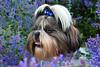 James (EmelineJames) Tags: dog chien animal nature fleurs nikon d3300