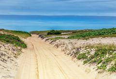 Beach Dunes of Martha's Vineyard (John Piekos) Tags: dunes sand nikon flowers offroad nature oversand vacation fourwheeldrive surfcasting beachplum chappaquiddick travel trusteesofthereservation dunegrass trail sky fishing wildliferefuge d750 2470mm marthasvineyard
