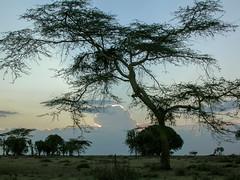 Loita Hills - Kenya 2003 (wietsej) Tags: loita hills kenya 2003 nikon coolpix 4500 sunset nature trees