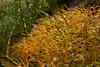 Yellow and Green (Guillermo S.L.) Tags: alicante alacant comunidadvalenciana españa sonya6000 sel35f18 valencia naturaleza nature spring primavera