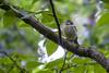 ? (Rich Jacques) Tags: bird wildife nature botanicalgardens sheffield june 2018 canon eos450d tree england uk