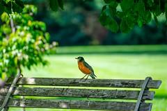 Bird On A Bench (jpaulmccu) Tags: bird bench telephoto 300mm nikon d3400 summer green