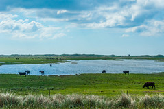 Jutland (faltimiras) Tags: denmark dinamarca jutland ribe lake sikeborg