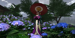 Summer hydrangeas (LiangScorpio) Tags: oiran secondlife sl kimono hydrangea rain flowers flower raindrop rainyday poem