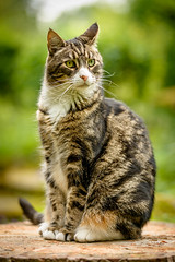 Oscar posing on a treestump (grahamrobb888) Tags: garden homegarden home birnam birnamwood perthshire scotland cat animal pet oscar portrait d800 nikon nikond800 nikkor af 80200mm f 28