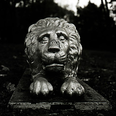 Lion, Mt Nebo cemetery (Nesster) Tags: grave cemetery totowa nj yashica mat 124g ilford delta 100 ilfosol3