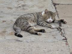 Sleepy tabby (prondis_in_kenya) Tags: kenya nairobi longrains sleep cat tabby concrete