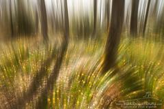 IZKI (Obikani) Tags: izki álava araba parkenaturala parquenatural pn narciso bosque surrealismo abstract nature landscape