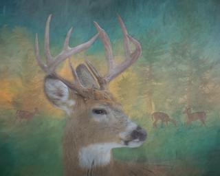9 Point Buck Painterly Scene #1