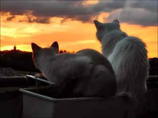 Katzen im Abendrot