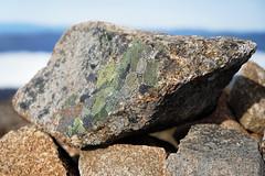 20180527-23-Lichen (Roger T Wong) Tags: 2018 australia mtfield mtfieldeast np nationalpark rogertwong sel2470z sony2470 sonya7iii sonyalpha7iii sonyfe2470mmf4zaosscarlzeissvariotessart sonyilce7m3 tasmania bushwalk dolerite outdoors rocks tramp trek walk