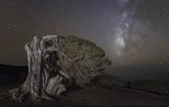 Take a bow (GC - Photography) Tags: elhierro islascanarias canaryislands españa spain nocturna landscape estrellas stars milkyway vialactea largaexposicion longexposure sky sabina tokinaaf1116f28 nikon d500 night gcphotography