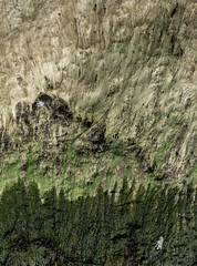 Mountain & Forest (Sub Voce) Tags: rock stone abstract abstraction algae green seaweed shore water river lake illusion mountain forest texture wet