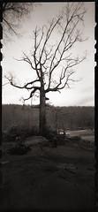 Winter Along the Cheat (DRCPhoto) Tags: zeroimage612b pinhole lenslessphotography kodakbw400cn 120film cheatriver westvirginia