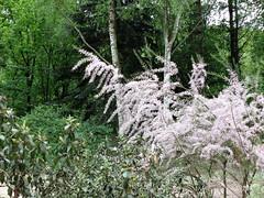 Himmelfahrt 2018 (R.S. aus W.) Tags: rub ruhr universität bochum botanischer garten nrw blumen tiere vatertag himmelfahrt feiertag blüten wachteln nordrhein westfalen pflanzen gewächshäuser besucher