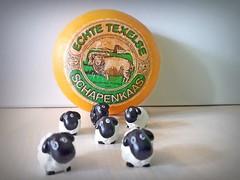 Schafskäse aus Texel (Mein Ruhrgebiet) Tags: schafskäse schapenkaas echte texelse texel nordsee nordholland holland niederlande schafe schaf käse
