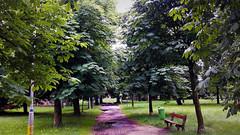 Élettől zöldellő liget (Szombathely) (milankalman) Tags: green summer nature