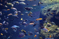 Oceanarium (jacekbia) Tags: europa polska poland wrocław zoo oceanarium afrykarium woda water zwierzęta animals canon 1100d 50mm ryby fish przyroda nature natura