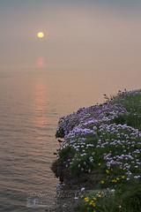 Sunset flowers (Simon Bone Photography) Tags: wildflowers portreath summer 2018 cornishsunsets cornwall wwwsimonbonephotographycouk sea cornishcoast waves sky cloud sun hitechnd09reversegrad canoneos7d canonef24105mmislf4